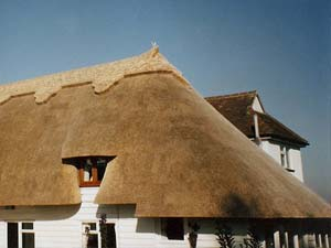 Wheat Reed Thatching
